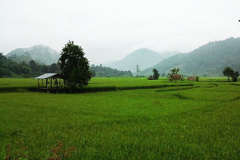 Rice Paddy Field, Thaton, Thailand
